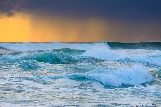 Lush Ocean